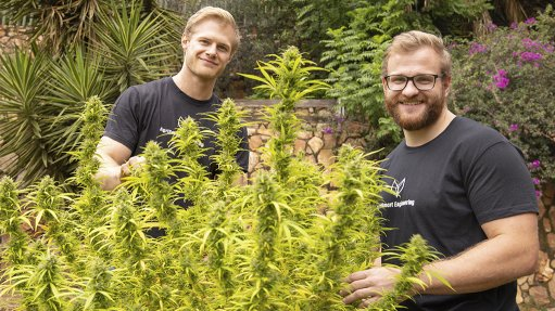 Two Wits students focus on agritech for cannabis industry