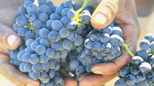 Late wine grape harvest serves up 1.4m tonnes