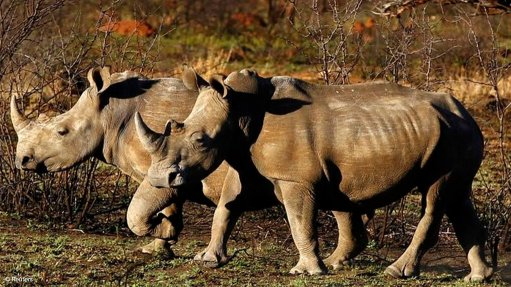 South African researchers hope to deter rhino poachers with radioactive markers