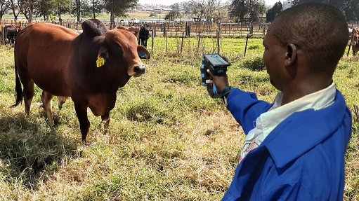 Blockchain-based e-livestock supply chain traceability system launched in Zimbabwe