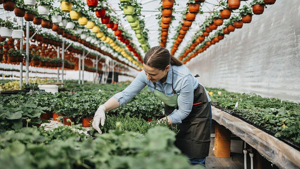 A photo of a woman tending plants in a nursery.