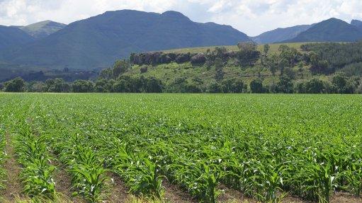 Eastern Cape maize farm