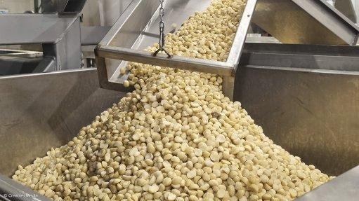 Marquis Macadamias Africa nut processing