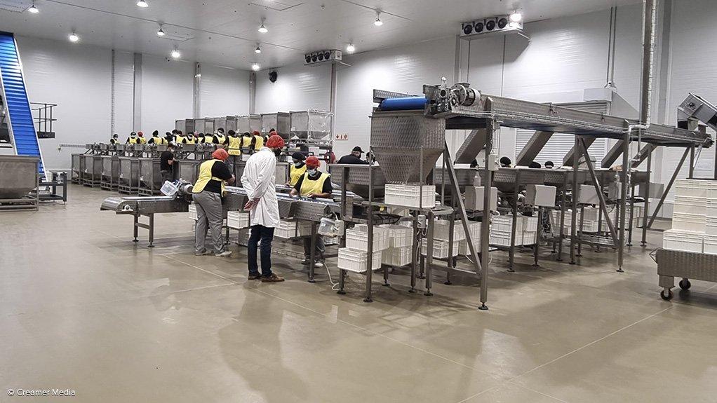Marquis Macadamias Africa factory based in Alkmaar