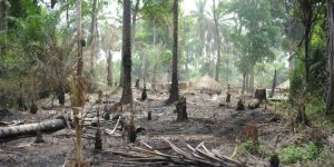 Africa's forests may be our last chance to slow climate change
