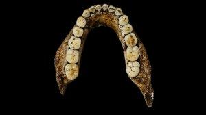 Homo naledi jawbone