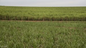 Sugarcane farmers to invest R640 million into small-scale grower development