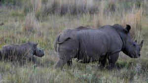 Govt undertakes rhino conservation efforts as world celebrates Rhino Day