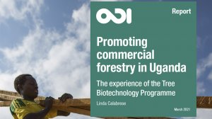 Promoting commercial forestry in Uganda: the experience of the Tree Biotechnology Programme