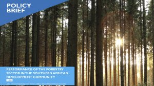 Performance of the forestry sector in the Southern African Development Community