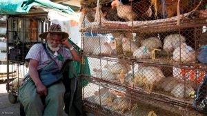 URGENT ALERT: Suspected outbreak of Avian Influenza